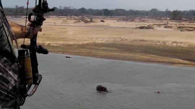 361 - Hipopotamos del Luangwa