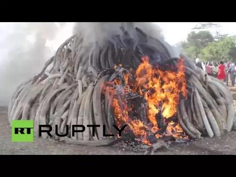 video marfil quemado