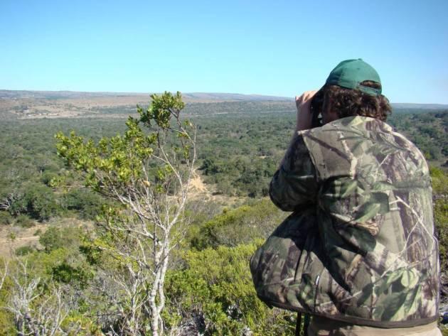 BUSHBUCK rececho cazador áfrica