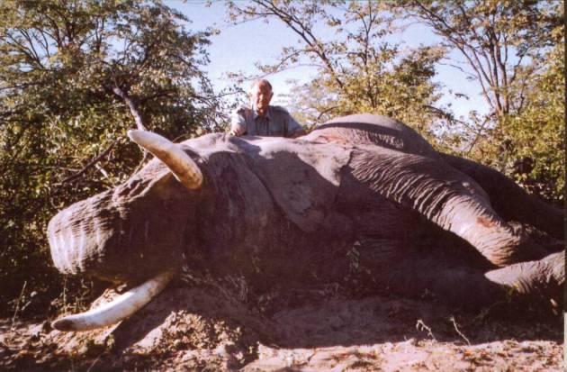 tercer elefante