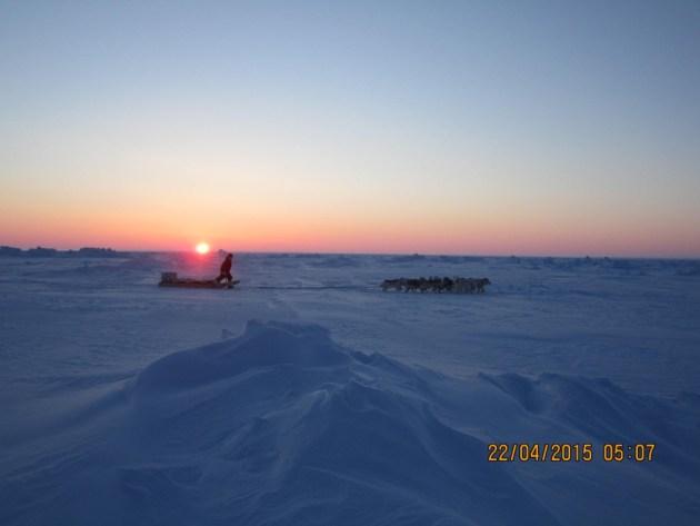 oso polar En los territorios  de nanook Resolute, Nunavut, Canadá