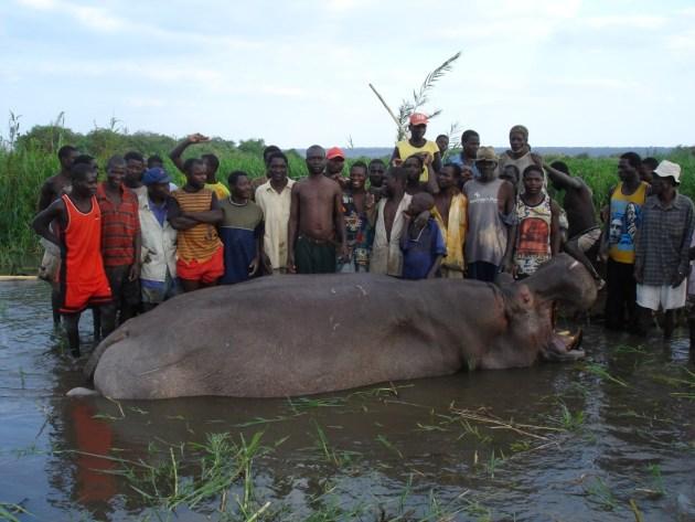 DSC07105 la carne se la llevan los nativos y se la comen