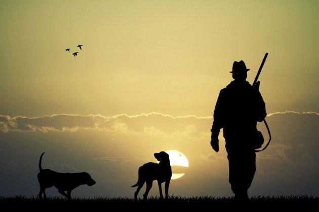 cazador con perros