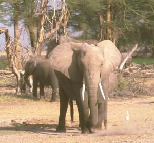 elefante 4 © SCI copia