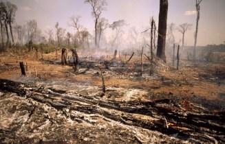 incendio ©_John_E_Newby-WWF