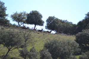 venados Fuente del Villar montería sierra cazafv (8)