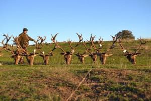rosalejo montería sierra cazas (11)