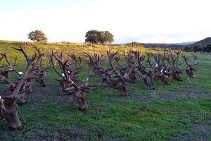 rosalejo montería sierra cazas (12)