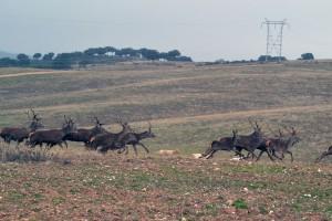 rosalejo montería sierra cazas (6)