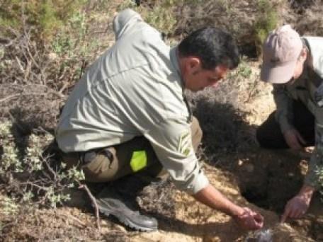 Los cebos son pruebas en el caso de delitos medioambientales, es importante no manipularlos y contactar con las autoridades. © FAC.