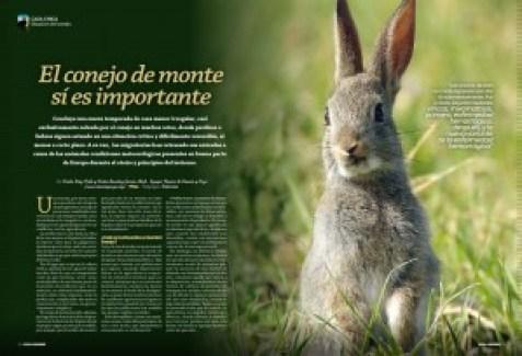 Caza chica conejo