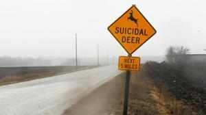 ciervos suicidas2