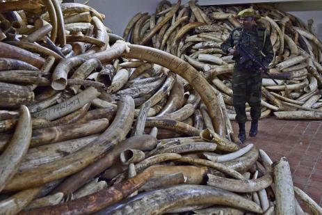 confiscaciones de marfil en KEnia Fuente KWS