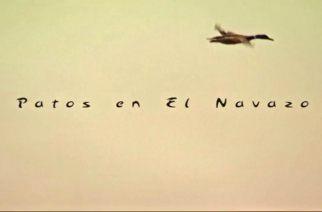 Patos en 'El Navazo'