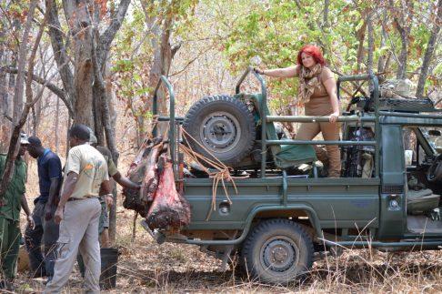 colocando cebo para león tanzania
