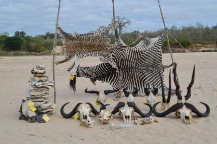 tanzania trofeos caza