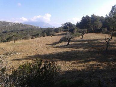 terrenos-recuperacion-cultivos-para-caza