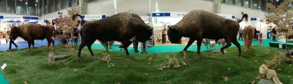 taxidermia-bisontes-cinegetica