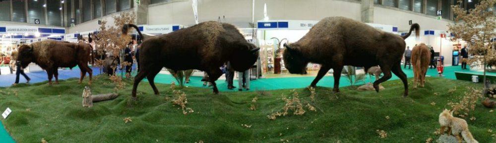 taxidermia-bisontes-cinegetica