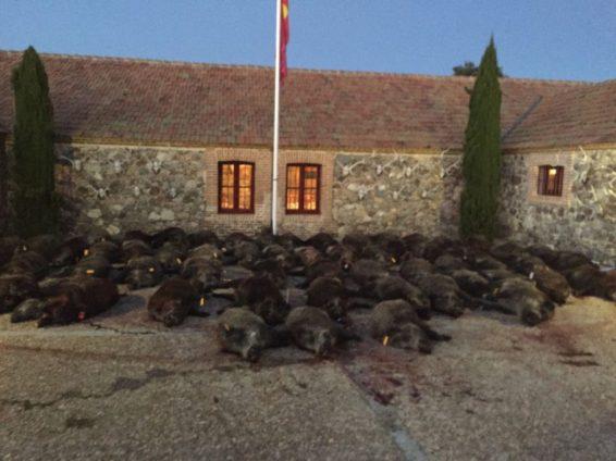 5-torreon-de-armenteros-monteria