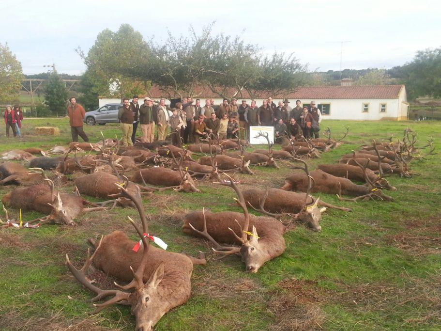 5monteria-sierra-iberica-cavalinhos