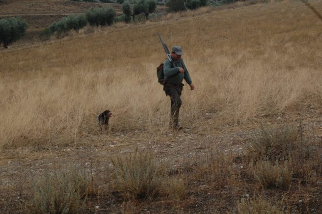 cazador conejo perro