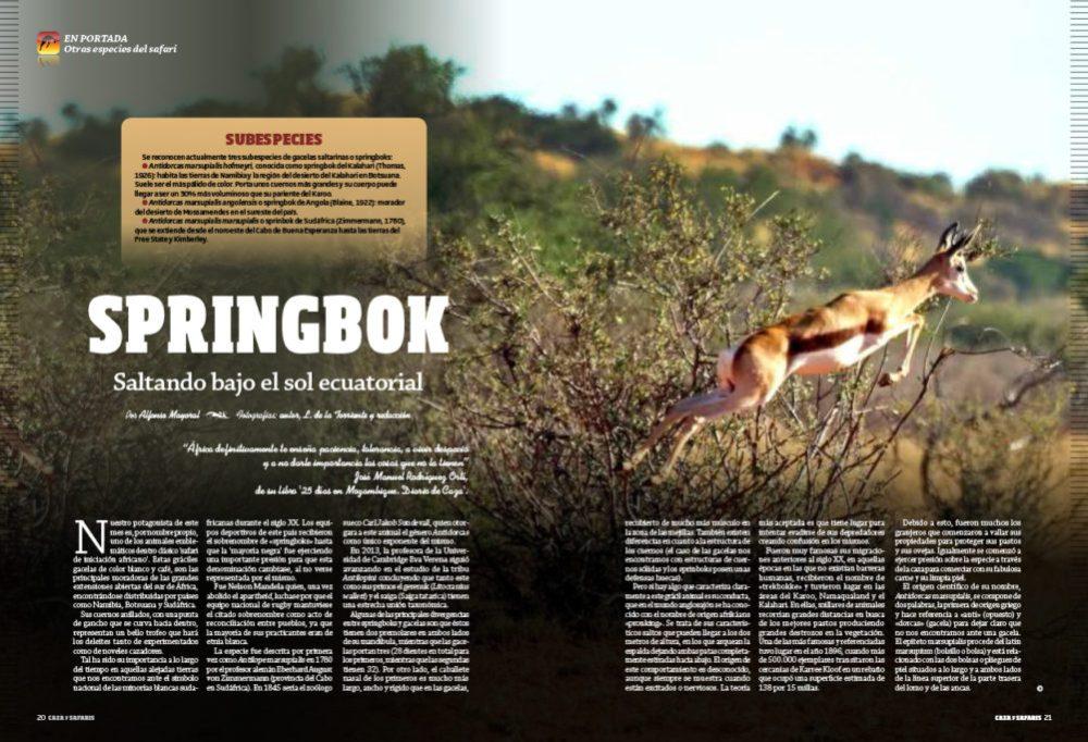 en-portada-springbok