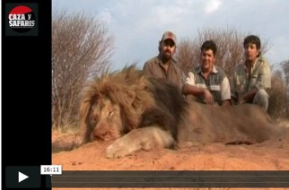 Caza de leones en África con Mbogo Safaris