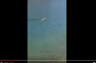 Curioso vídeo de una liebre cruzando un lago