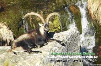 La RRC 'La Sierra' subasta 67 lotes de macho montés el próximo 1 de abril