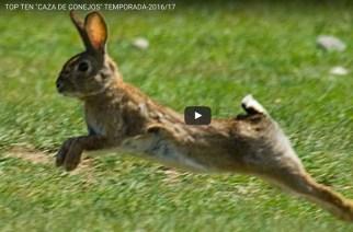 Top ten de caza de conejos durante la temporada 2016/17