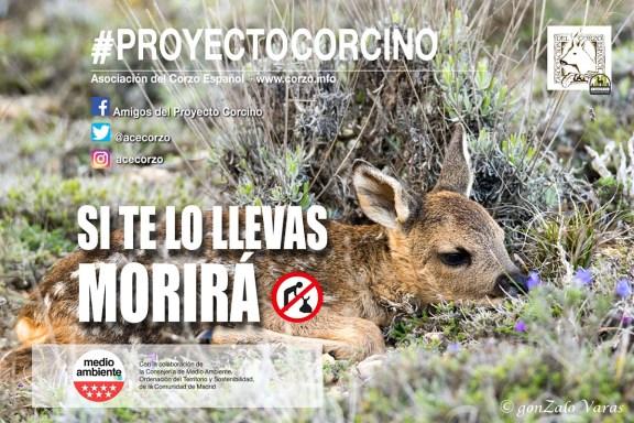 Campaña Proyecto Corcino