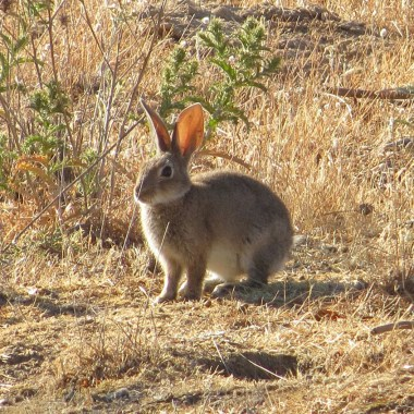 jabalíes y conejos por daños