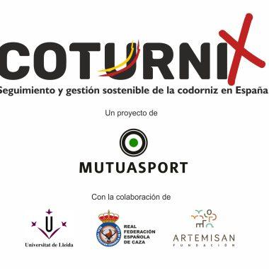 coturnix