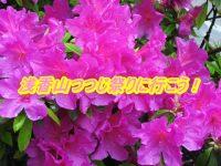 浅香山つつじ祭り2019の駐車場とアクセスを確認!開花状況と見頃もチェック!
