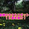 島根県のホタルの見頃時期と穴場スポット12選!観賞のポイントも確認!