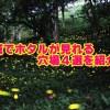 茨城県のホタルの見頃と穴場スポット4選!観賞のポイントも確認!