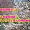 水戸偕楽園梅まつり2019/混雑と駐車場情報!ライトアップと花火の時間も確認!