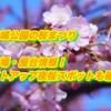 浜松城公園の桜まつり2019/駐車場・屋台情報!ライトアップ夜桜スポットも確認!