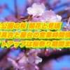 里見公園の桜2019開花と見頃は?混雑具合と屋台の営業時間情報!ライトアップは桜祭り期間まで