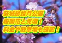 萩城跡指月公園の桜2020開花と見頃!料金や駐車場も確認!