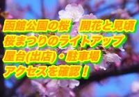 函館公園の桜2020開花と見頃は?桜まつりのライトアップと屋台(出店)・駐車場・アクセスを確認!