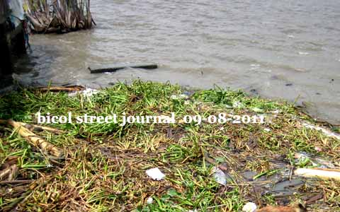 DENR: Bicol Rivers and Lakes Hyacinth-Free
