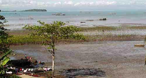 2015_1016_mangrove2