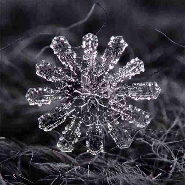 2016_0113_snowflakes2x