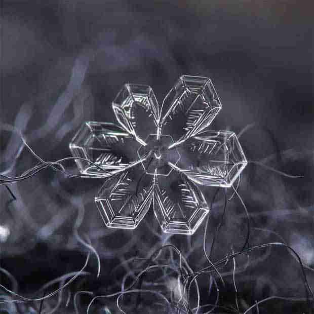 2016_0113_snowflakes4x