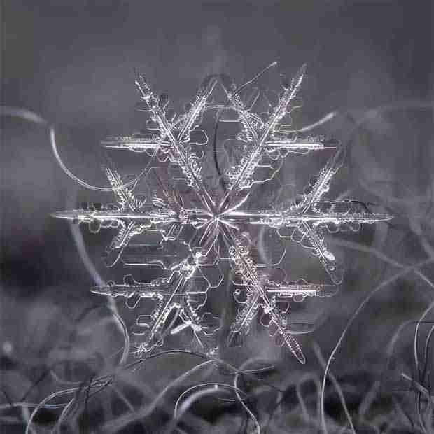 2016_0113_snowflakes5x