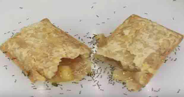 Watch ants eat fresh baked apple pie