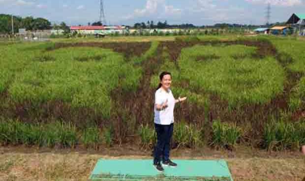 Not a foot padding on Sen. Grace Poe's rice paddy art photo?