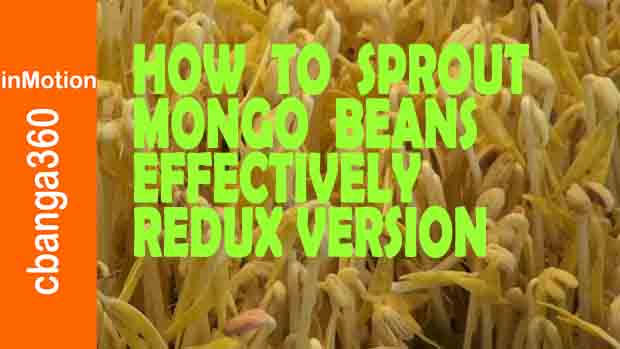 How to Grow Mung Bean Sprouts Effectively Redux Edition in 4K